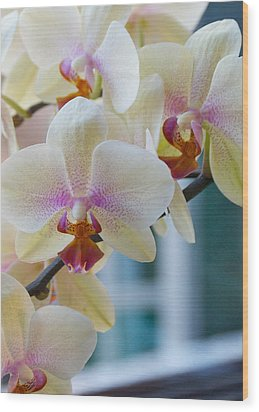 Orchids In The Morning Light Wood Print by Debbie Karnes
