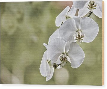 Orchids Wood Print by Karen Walzer