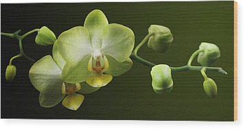 Orchids Wood Print by Marc Huebner