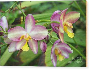 Orchids Wood Print by Rosemary Aubut