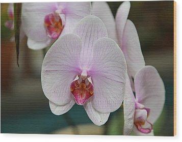Orchids - Us Botanic Garden - 011312 Wood Print by DC Photographer