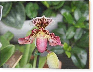 Orchids - Us Botanic Garden - 011332 Wood Print by DC Photographer