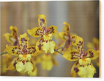 Orchids - Us Botanic Garden - 011345 Wood Print by DC Photographer
