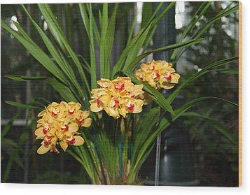 Orchids - Us Botanic Garden - 01137 Wood Print by DC Photographer