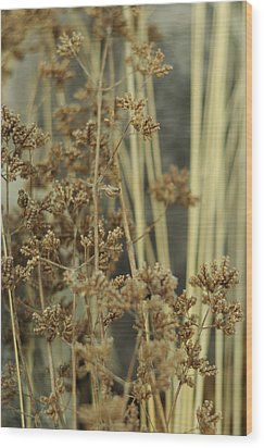 Wood Print featuring the photograph Oregano In Winter by Rebecca Sherman