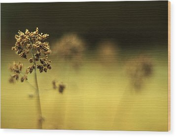Wood Print featuring the photograph Oregano Winter Warmth by Rebecca Sherman