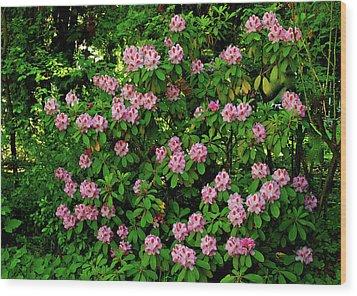 Oregon Azaleas Wood Print by Ed  Riche
