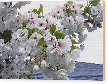 Oregon Cherry Blossoms Wood Print by Will Borden