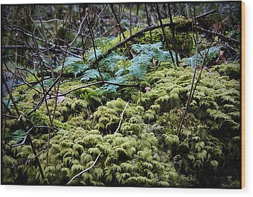 Oregon Forest Floor Wood Print by Milton Thompson