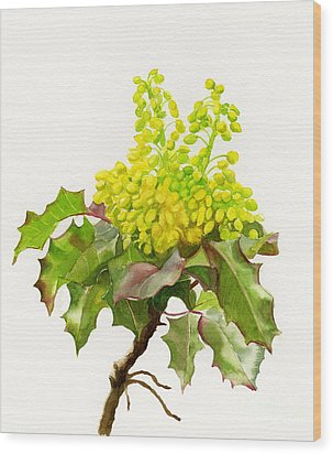 Oregon Grape White Background Wood Print by Sharon Freeman