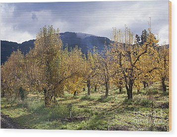 Oregon Orchard Wood Print by Peter French