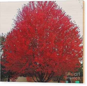 Oregon Red Maple Beauty Wood Print by Kim Petitt