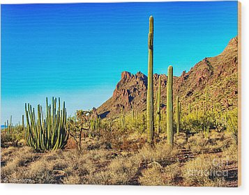 Organ Pipe Cactus National Monument Late Afternoon Wood Print by Bob and Nadine Johnston