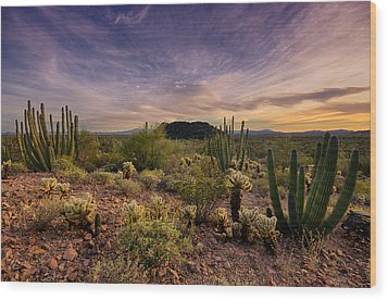 Organ Pipe Cactus Sunset  Wood Print by Saija  Lehtonen