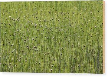 Organic Green Grass Backround Wood Print