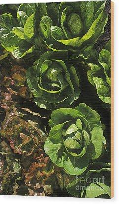 Organic Lettuce Wood Print by Craig Lovell