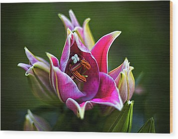 Oriental Day Lily Wood Print