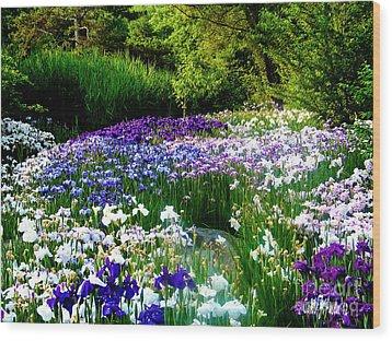 Oriental Ensata Iris Garden Wood Print
