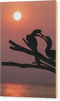 Oriental Pied Hornbills Wood Print by Paul Williams