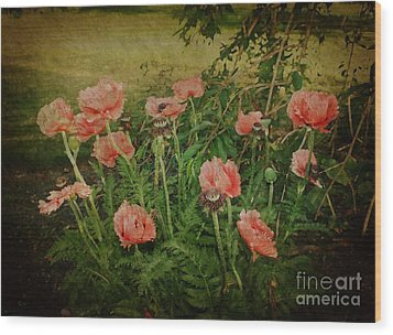 Oriental Poppies Wood Print by Rosemary Aubut