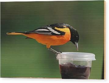 Oriole At Feeder Wood Print