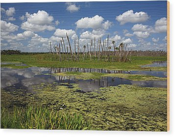 Orlando Wetlands Cloudscape 2 Wood Print by Mike Reid