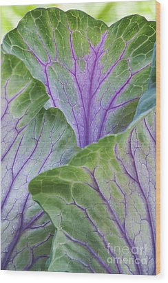 Ornamental Cabbage Leaves Wood Print by Tim Gainey