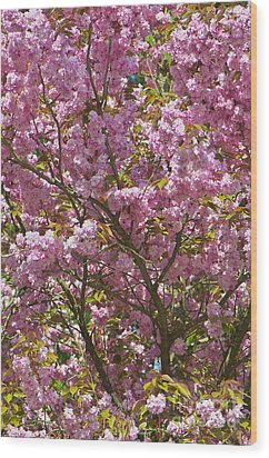 Ornamental Cherry Tree Wood Print by Sharon Talson