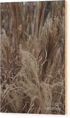 Ornamental Grass Wood Print by Arlene Carmel