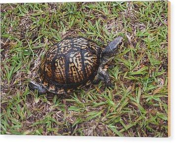 Box Turtle Wood Print by Mechala  Matthews