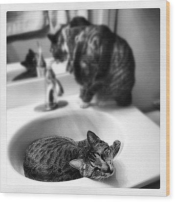 Oskar And Klaus At The Sink Wood Print by Mick Szydlowski