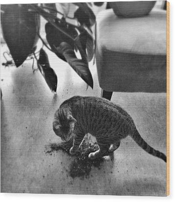 Oskar In Trouble Wood Print by Mick Szydlowski