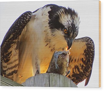 Wood Print featuring the photograph Osprey Breakfast by Dianne Cowen