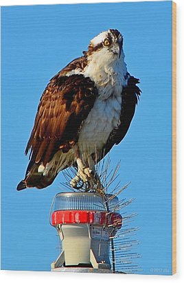 Wood Print featuring the photograph Osprey Close-up On Water Navigation Aid by Jeff at JSJ Photography