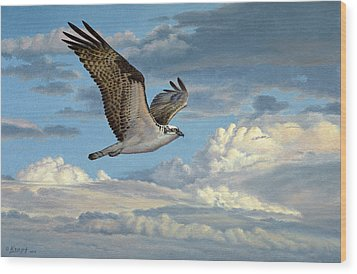 Osprey In The Clouds Wood Print by Paul Krapf