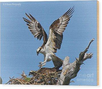 Osprey Mating Wood Print by Barbara Bowen