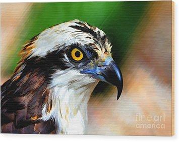 Osprey Portrait Wood Print by Dan Friend