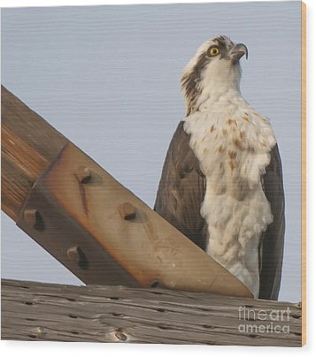 Wood Print featuring the photograph Osprey -seahawk by Dale Powell