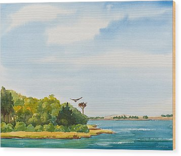 Ospreys On The Vineyard Watercolor Painting Wood Print by Michelle Wiarda