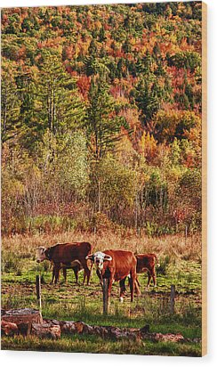 Wood Print featuring the photograph Cow Complaining About Much by Jeff Folger
