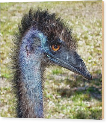 Wood Print featuring the photograph Ostrich 1 by Dawn Eshelman