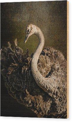 Ostrich Ballet Wood Print by Mike Gaudaur