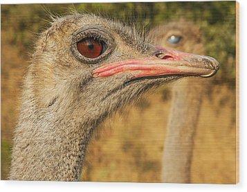 Ostrich Closeup Wood Print by Jess Kraft