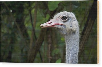 Ostrich Head Wood Print by Aged Pixel
