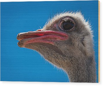 Ostrich Profile Wood Print by Jean Noren