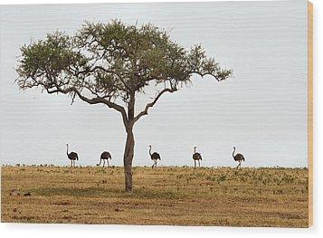 Ostrich Walk Wood Print by Joe Bonita