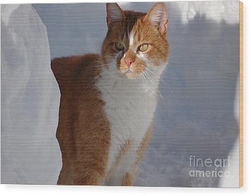 Wood Print featuring the photograph Otis by Christiane Hellner-OBrien