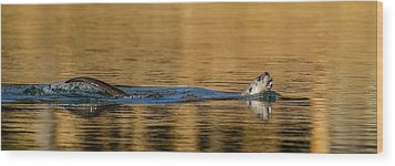 Wood Print featuring the photograph Otter Catch by Yeates Photography