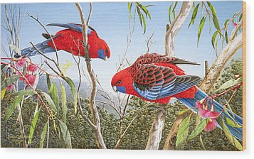 Our Beautiful Home - Crimson Rosellas Wood Print by Frances McMahon
