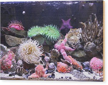 Our Colourful Underwater World Wood Print